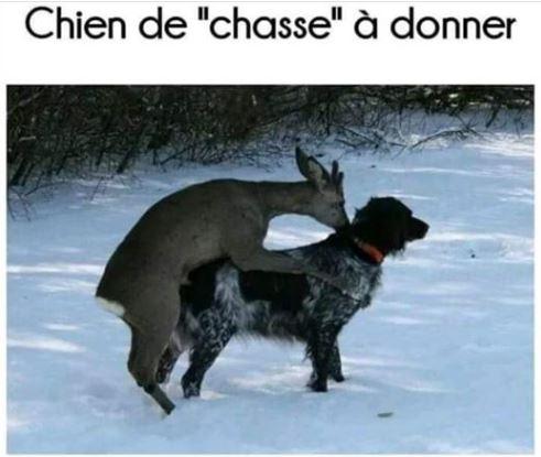 Chiendechasse.JPG